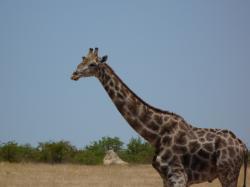 P1050514_Etosha_National_Park.JPG
