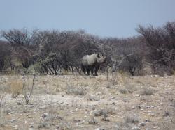 P1050569_Etosha_National_Park.JPG